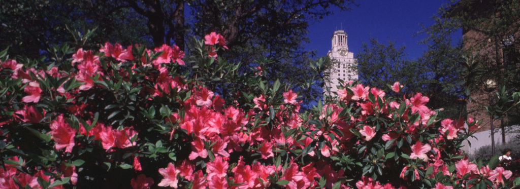 UT Tower with azaleas