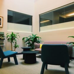 "Corner of the Law School with plants, blue chairs, a purple couch, and a shelf of books. This is the John A. Robertson ""alcove""."